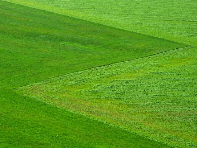 Co trzeba wiedzieć podczas zakładania trawnika? Kiedy najlepiej siać trawę?
