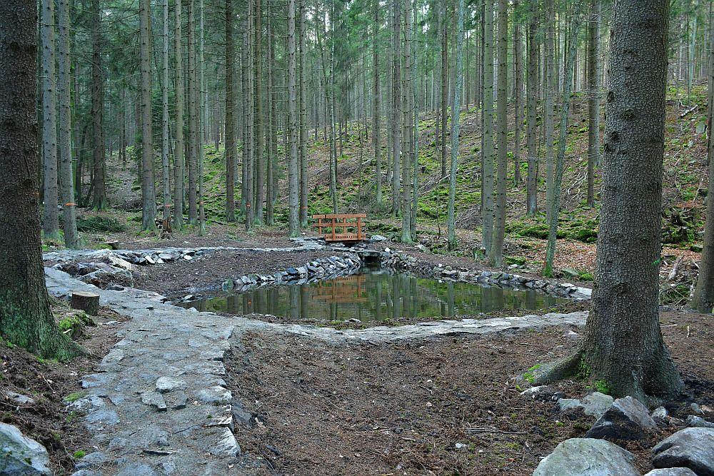 Staw pstrągowy na potoku Rogoziniec